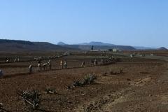 Eritrean Workers