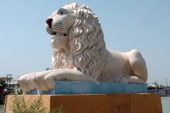 Roorkee Lion